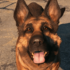 dogmeatn_fallout_4.png